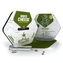 White Cheese Autoflowering (Zambeza) feminisiert