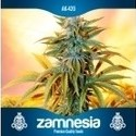 Free Seed (Zamnesia Seeds) auto