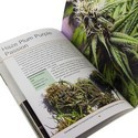 Cannabis Sativa Volume 3