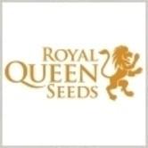 Same kostenlos (Royal Queen Seeds)