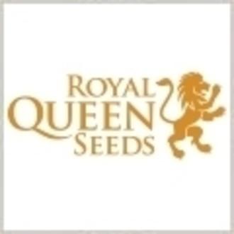 Same kostenlos (Royal Queen Seeds) Sour Diesel