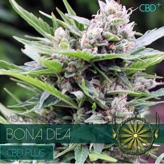 Bona Dea CBD (Vision Seeds) feminisiert