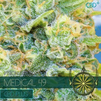 Medical 49 (Vision Seeds) feminized