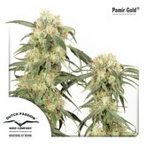 Pamir Gold (Dutch Passion) femminizzata