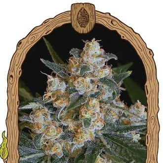 Lemon Candy (Exotic Seed) feminized