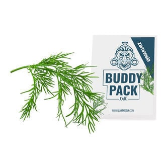 Dill (Anethum graveolens) Buddy Pack