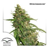 CBD Auto Compassion Lime (Dutch Passion) feminized