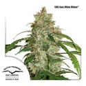 CBD Auto White Widow (Dutch Passion) feminisiert