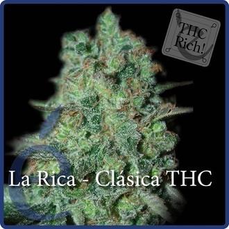 La Rica Classic THC (Elite Seeds) Femminizzata