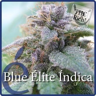 Blue Elite Indica (Elite Seeds) Feminisiert