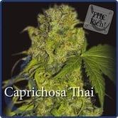 Caprichosa Thai (Elite Seeds) feminized