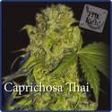 Caprichosa Thai (Elite Seeds) feminisiert
