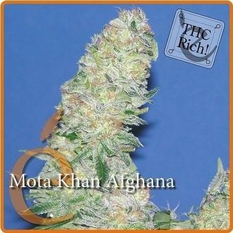 Mota Khan Afghana (Elite Seeds) feminisiert
