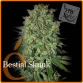 Bestial Skunk (Elite Seeds) feminized