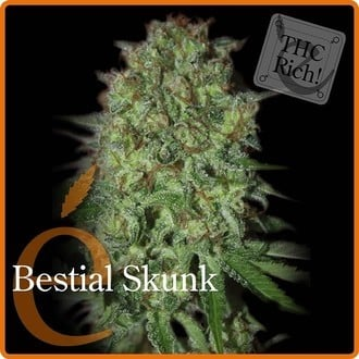 Bestial Skunk (Elite Seeds) feminized