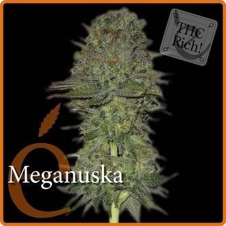 Meganuska (Elite Seeds) feminisiert