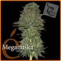 Meganuska (Elite Seeds) feminized