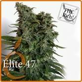 Elite 47 (Elite Seeds) feminized