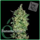 Banana Joint (Elite Seeds) feminized