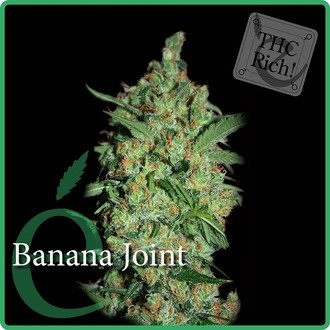 Banana Joint (Elite Seeds) Femminizzata