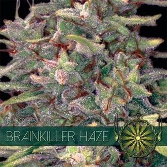 Brainkiller Haze (Vision Seeds) feminized