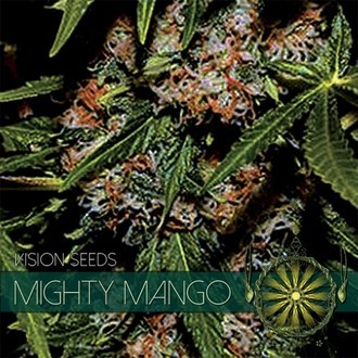 Mighty Mango Bud (Vision Seeds) feminized