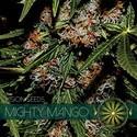 Mighty Mango Bud (Vision Seeds) feminisiert