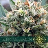 Supreme Lemon (Vision Seeds) feminisiert