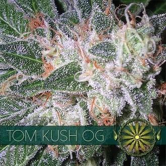 Tom Kush OG (Vision Seeds) feminized