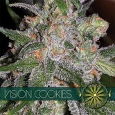 Vision Cookies (Vision Seeds) Femminizzata