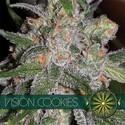 Vision Cookies (Vision Seeds) feminisiert