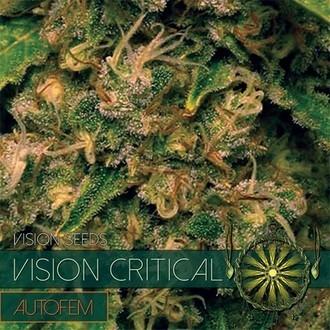Vision Critical Autoflowering (Vision Seeds) feminisiert