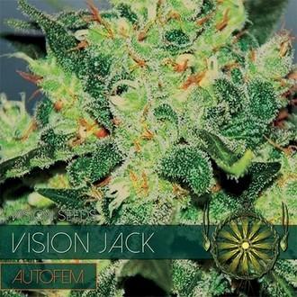 Vision Jack Autoflowering (Vision Seeds) feminisiert