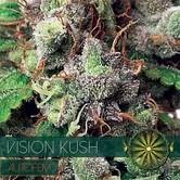 Vision Kush Autoflowering (Vision Seeds) feminisiert