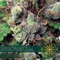 Vision Kush Autofiorente (Vision Seeds) Femminizzata