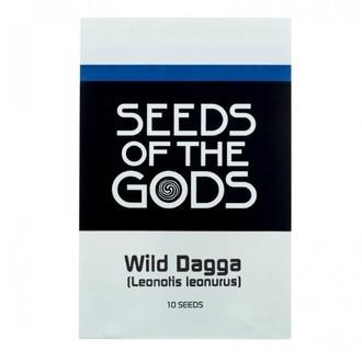 Wild Dagga (Leonotis leonurus) 10 Samen