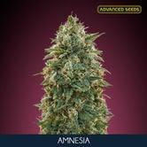 Amnesia (Advanced Seeds) feminized