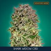 Shark Widow CBD (Advanced Seeds) feminized