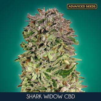 Shark Widow CBD (Advanced Seeds) feminisiert