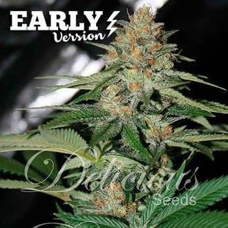 Delicious Candy Early Version (Delicious Seeds) feminisert