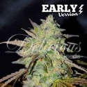 Marmalate Early Version (Delicious Seeds) feminized
