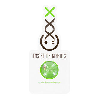AK-020 Autoflower (Amsterdam Genetics) Feminized