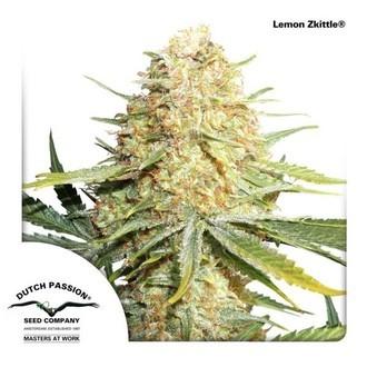 Lemon Zkittle (Dutch Passion) Femminizzata