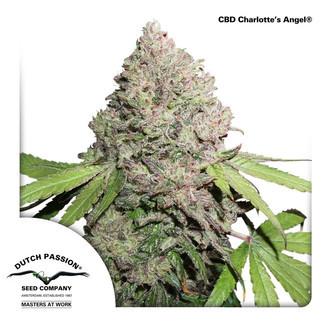 CBD Charlotte's Angel (Dutch Passion) Feminized