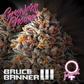 Bruce Banner III (Grower's Choice) feminized