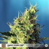 Sweet Pure CBD (Sweet Seeds) feminized