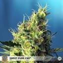 Sweet Pure CBD (Sweet Seeds) feminisiert