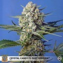 Crystal Candy F1 Fast Version (Sweet Seeds) Femminizzata