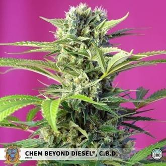 Chem Beyond Diesel CBD (Sweet Seeds) feminized