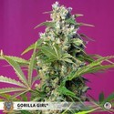 Gorilla Girl (Sweet Seeds) feminisiert